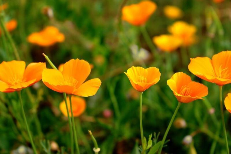 Цветы, которые зацветут через месяц после всходов