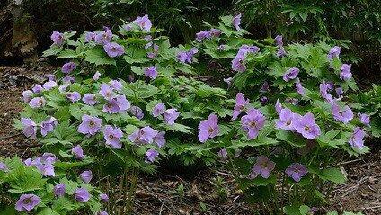 Идеальный цветок для сада