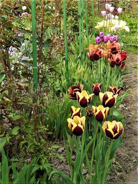 Мой сад в начале лета.