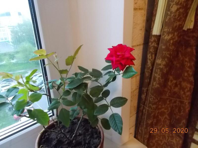 О цветочках