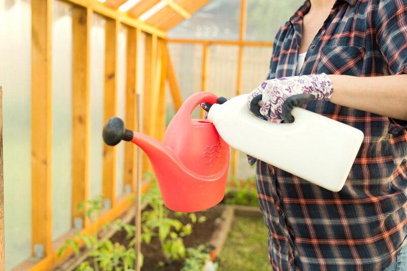 Применение пищевой соды для удобрения помидоров