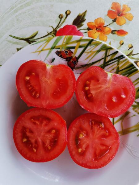 Мой любимый универсальный сорт томата. Вкусный и урожайный.