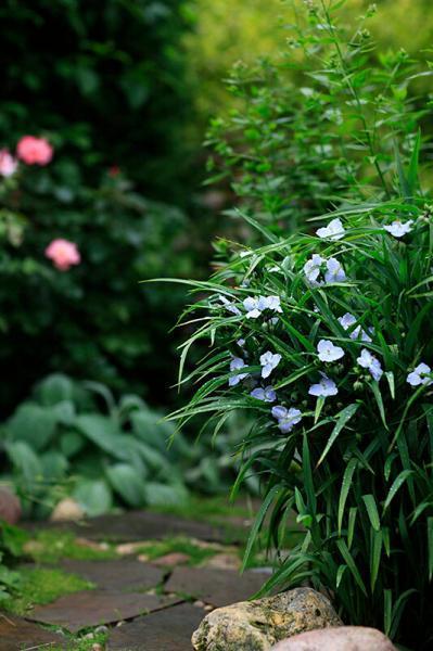 Секреты красивого сада. Фон для цветника.