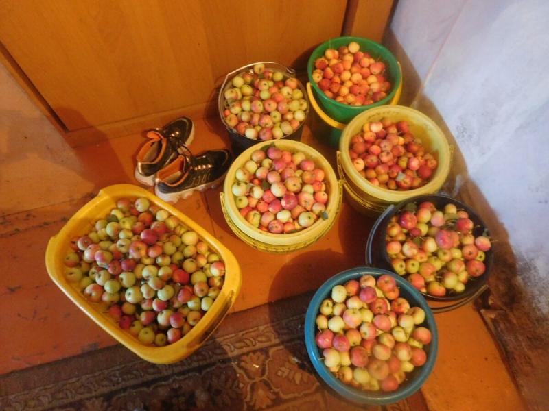 04.08.Будний день сельских. Собираем урожай.