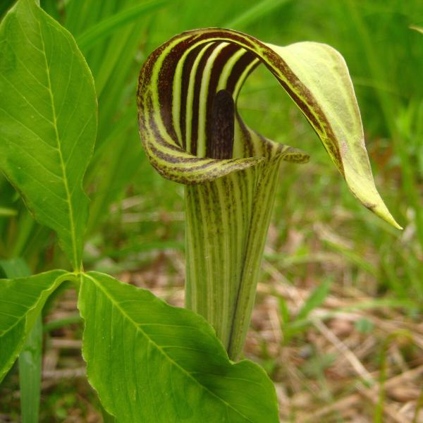 Экзотические растения для сада