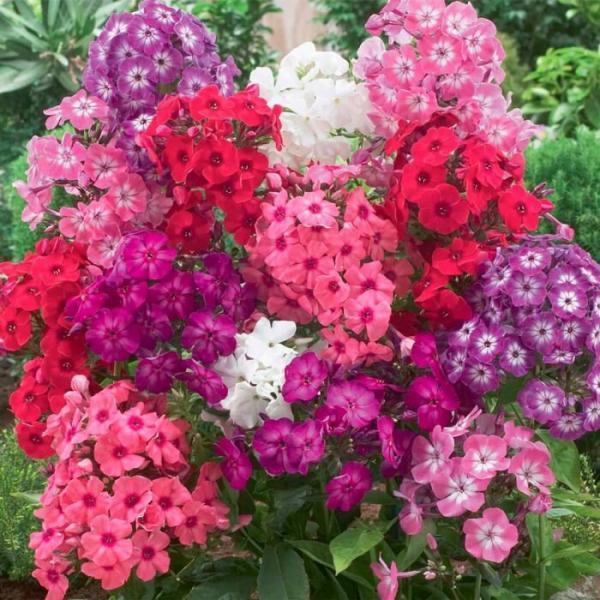 Какие цветы лучше сажать осенью