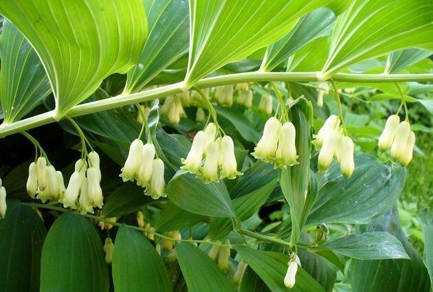9 растений для цветника в тени
