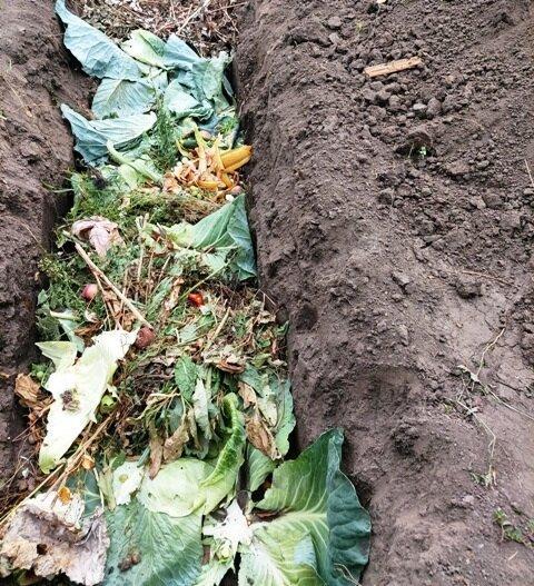 Что делать с растительным мусором после сбора урожая
