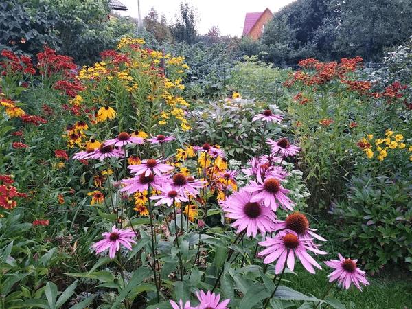 Эхинацея – неизменный спутник осеннего сада