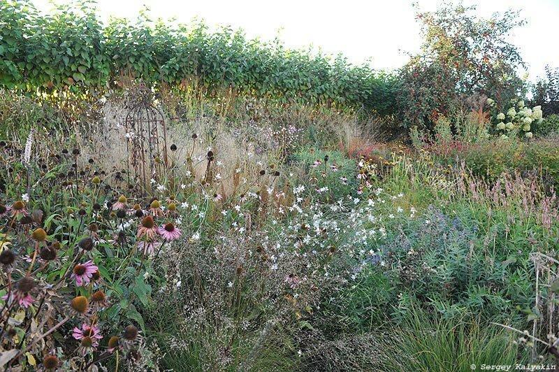 Мой сад в середине сентября