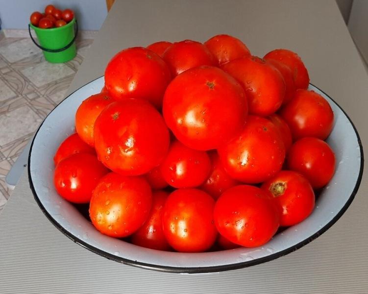 25 популярных сортов томатов из моей коллекции