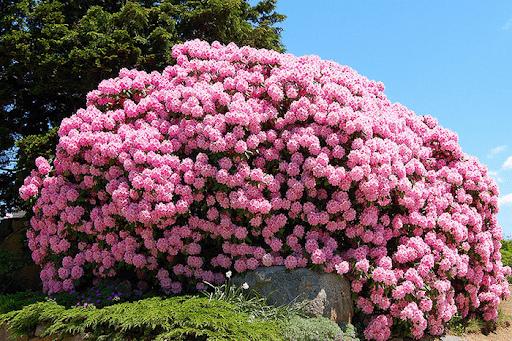 Букетная посадка - интересный вариант цветника