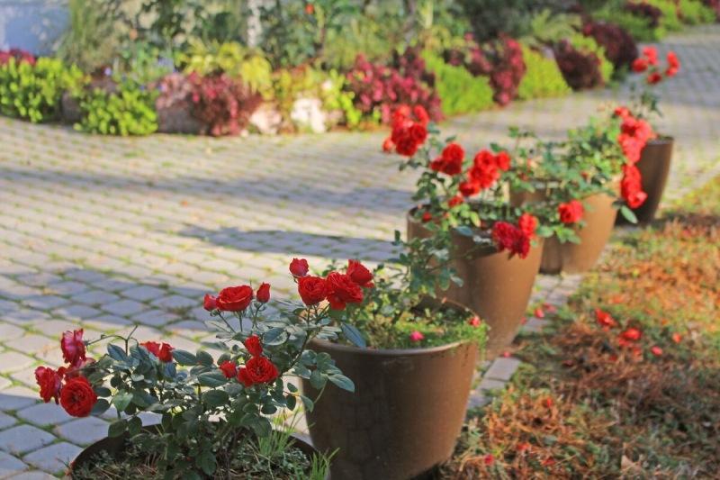 Что красивого в моем саду во второй половине октября