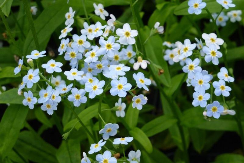Цветы с конца мая по сентябрь и минимум хлопот