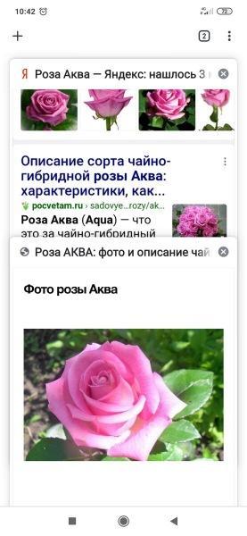 Думала сезон закрыла, но нет... Купила ещё 3 розы