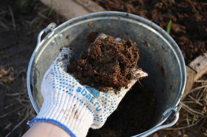Как правильно посадить лук севок под зиму. Мой простой способ