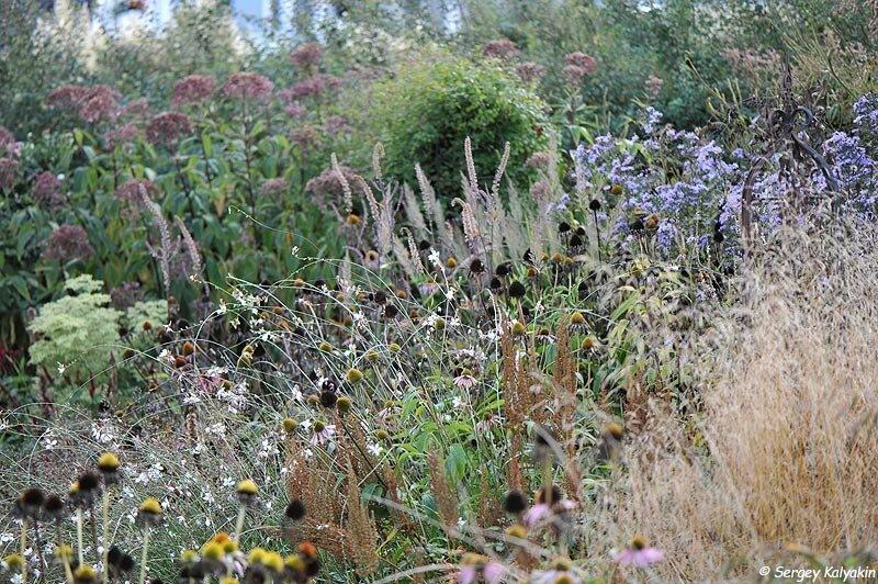 Мой сад в конце сентября: цветение продолжается