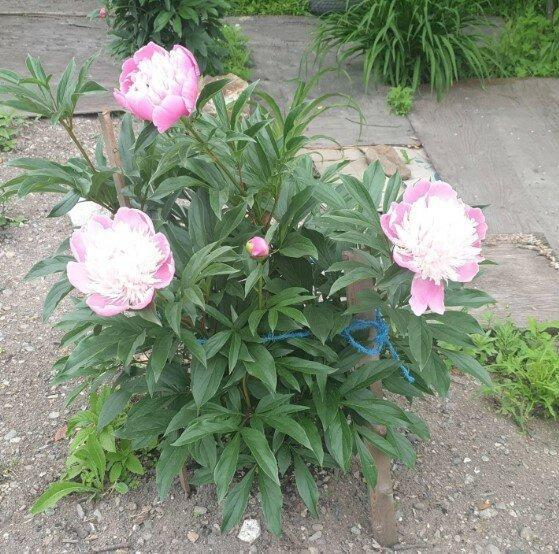 Цветы, которые будут расти в любых условиях