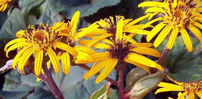 Этот многолетний цветок является королем тенистого места