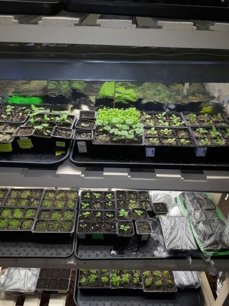Как вырастить лобелию из семян и когда её посеять в сезоне 2021.