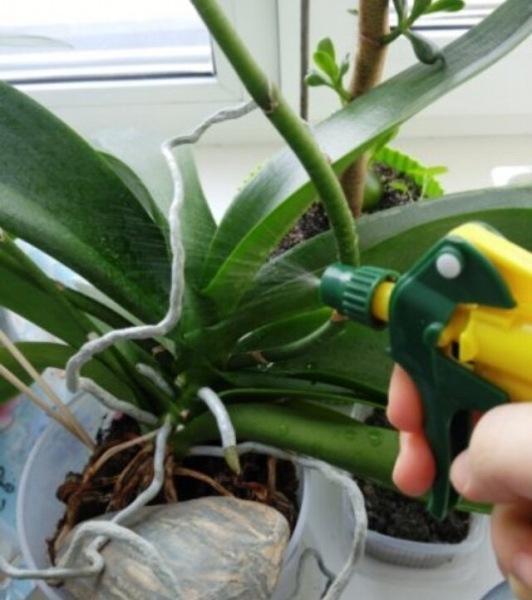 Как заставить цвести орхидею: Делюсь,метод работает на 100%