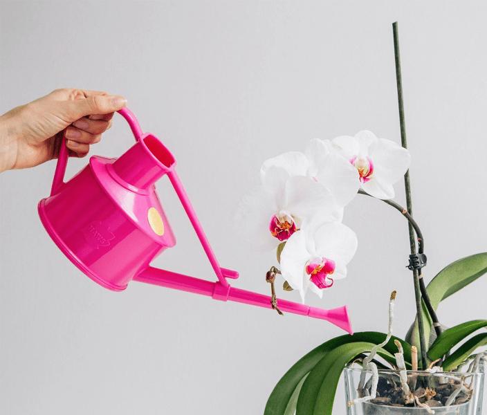 Как заставить орхидею фаленопсис быстрее зацвести