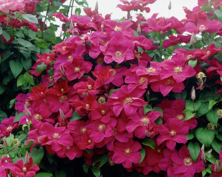 Какие садовые Цветы будут наиболее популярные в 2021 году. Личное мнение