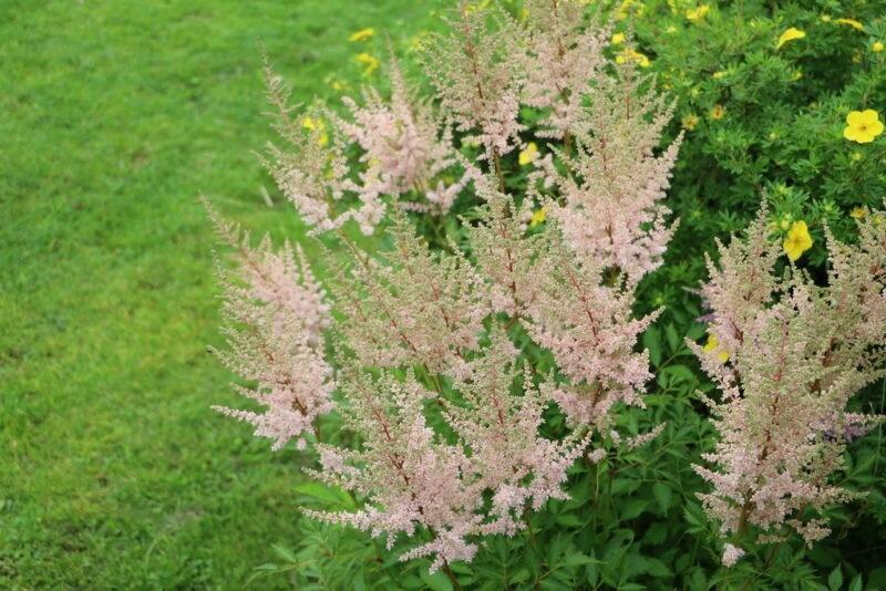 Красота на все лето: 10 самых долгоцветущих многолетних растений