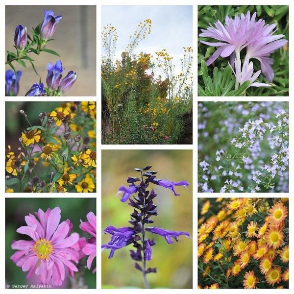 Мой сад в октябре: осенние краски