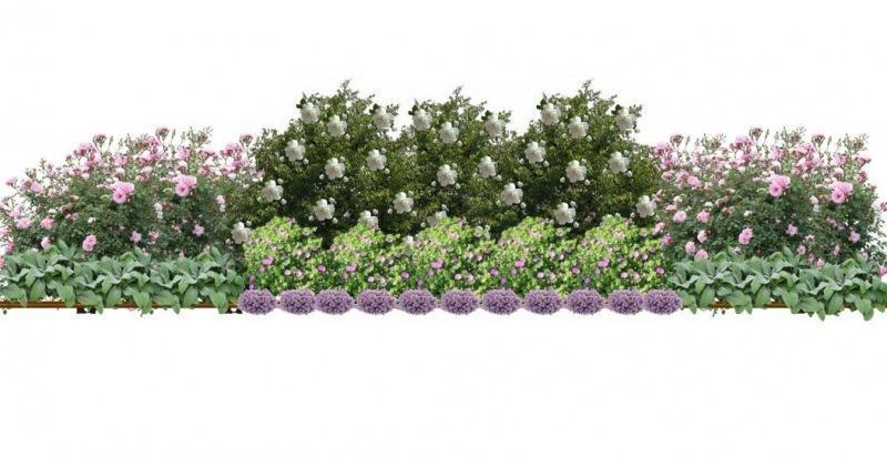 Простая, но эффектная схема композиции из роз