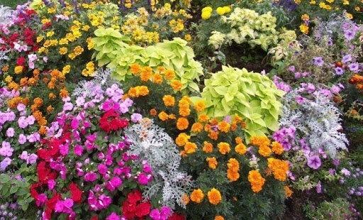 Три основных ошибки садоводов-любителей