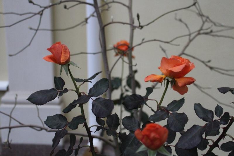 Что цветет в моем саду 1 декабря