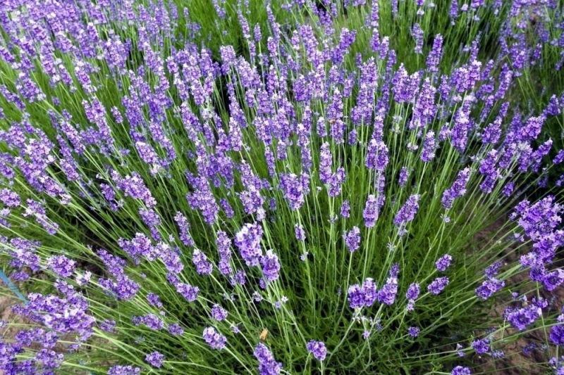 Какие цветы можно посеять на рассаду в декабре?