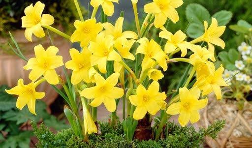 Клумба из многолетников непрерывного цветения
