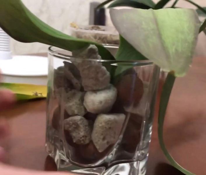 Корни у орхидей реально попёрли в этом грунте!