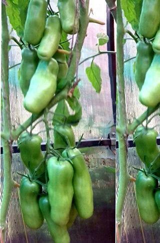 С этих сортов урожай всегда больше ведра с куста