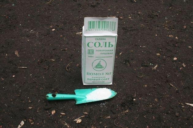 Соль на огороде творит чудеса! Для каких 3 целей она используется?