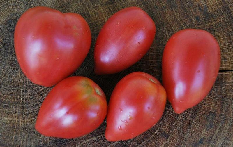 Сорта томатов – урожайные, сладкие - предлагают наши читатели