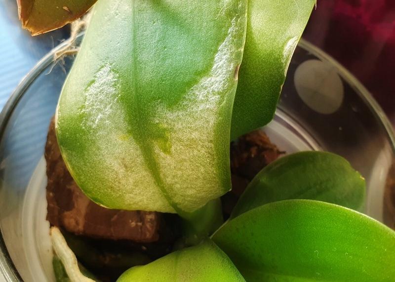 Ваша первая орхидея: чек-лист для новичка