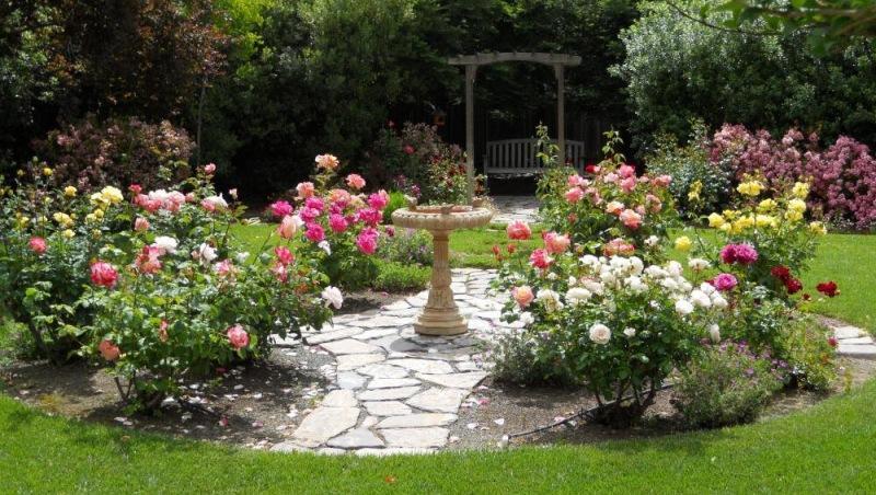 Виды роз и правила оформления цветника