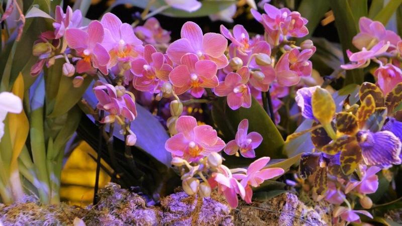 Выращивание орхидей от А до Я