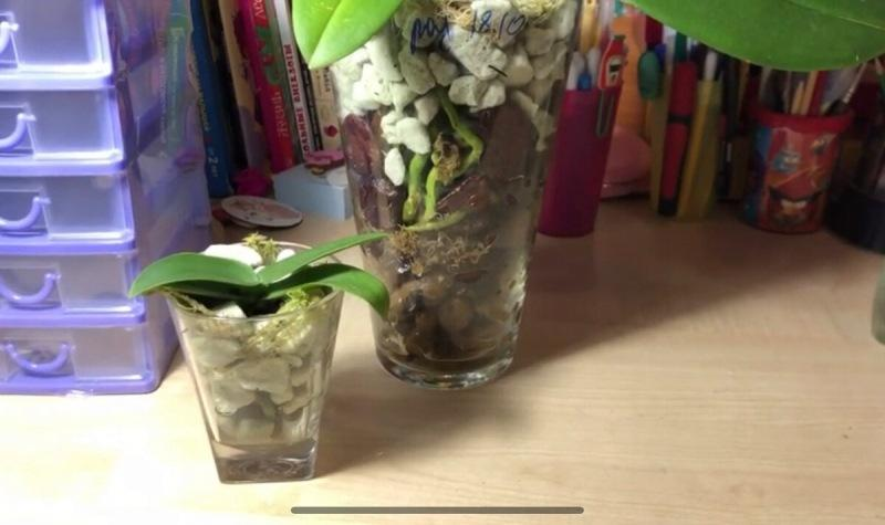 Закрытая система прекрасно подошла для орхидей