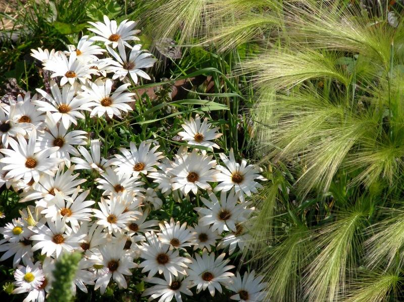 5 цветов, которые сеют в январе