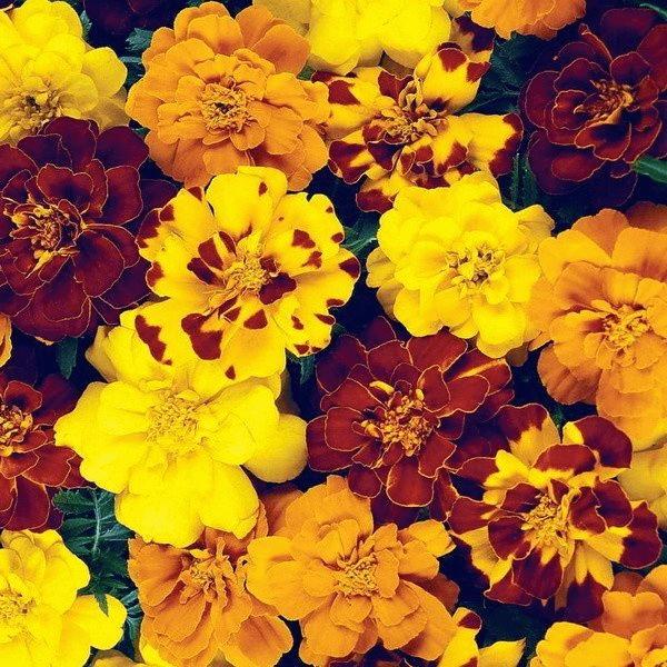 Цветы-новинки 2021, часть 2