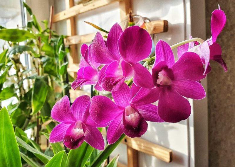Дело к весне. Что изменить в уходе за орхидеями