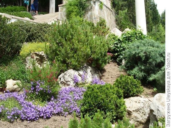 Яркие колокольчики в саду: синее чудо среди камней
