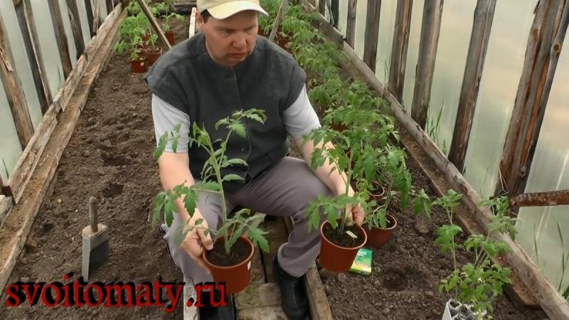 Какую рассаду надо вырастить?