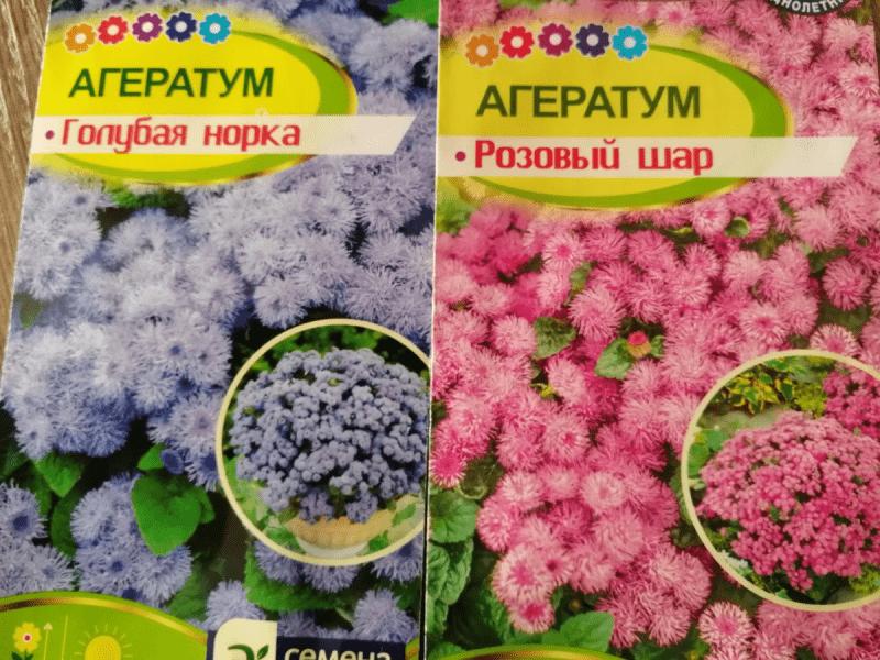 Мобильные клумбы: какие цветы посажу в ведра