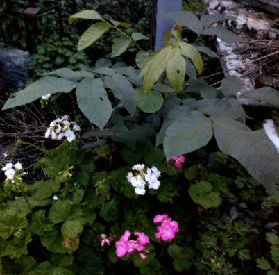 Мои комнатные цветы. Какой люблю больше других?