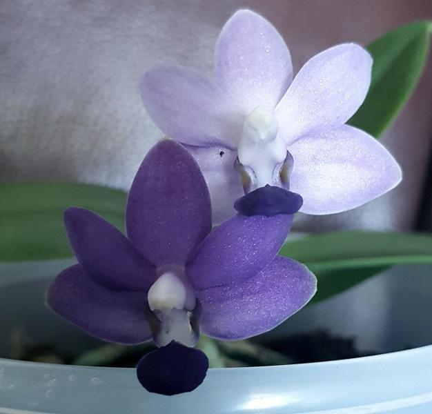 Неожиданные вопросы об орхидеях
